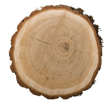 Photo pour Large circular piece of wood - image libre de droit