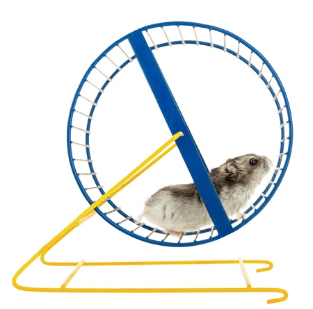 Photo for Hamster on a Wheel Isolated - Royalty Free Image