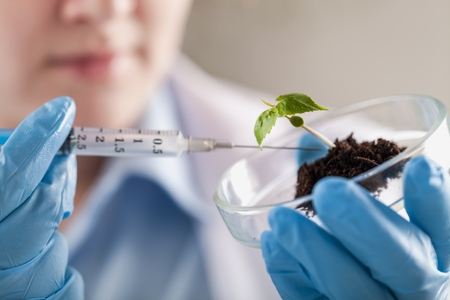 Foto de Close-up of a green plant and hand of scientist with tweezers - Imagen libre de derechos