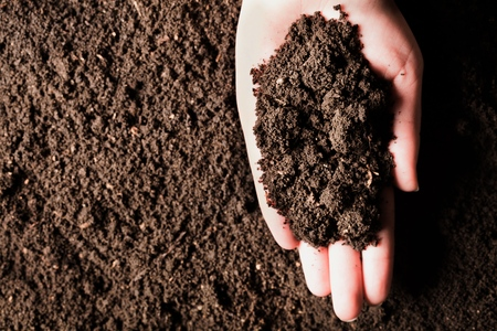 Photo for Soil in hand, palm, cultivated dirt, earth, ground, brown land background. Organic gardening, agriculture. Nature closeup. Environmental texture, pattern. Mud on field. - Royalty Free Image