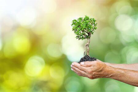 Foto de Ecology concept child human hands holding big plant tree with on blurred background world environment - Imagen libre de derechos