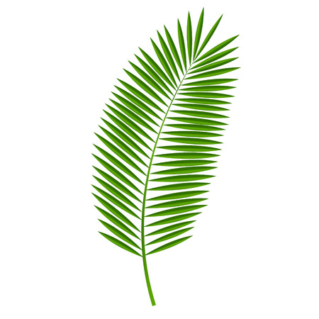 Illustration for Palm Leaf Vector Illustration - Royalty Free Image