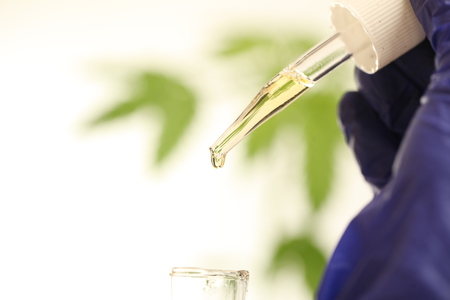 Foto de Plant in laboratory medical marijuana cannabis oil - Imagen libre de derechos