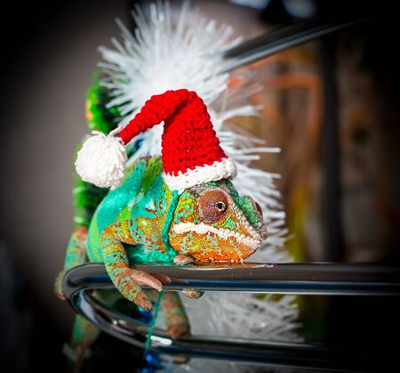 Chameleon with a red Santa Claus hat