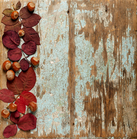Foto de Flat lay frame of autumn crimson leaves, hazelnuts and walnuts on a blue wooden background. Selective focus. - Imagen libre de derechos
