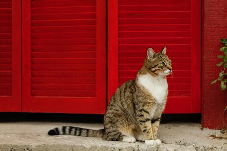 Photo pour Beautiful sad cat on a background of red shutters. Selective focus. - image libre de droit