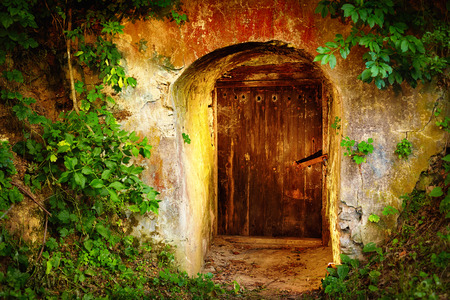 Photo for old entrance door in forest. Wine cellar - Royalty Free Image