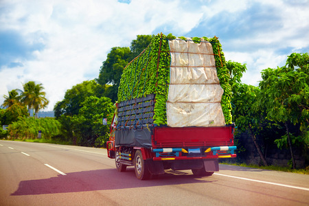 a truck carrying a load of bananas, driving through Dominican Republic road