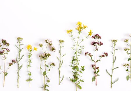 Foto de Various herbs and flowers on white background, top view, floral border - Imagen libre de derechos