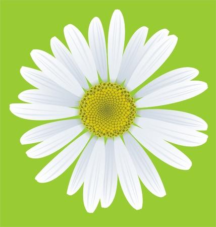 Illustration pour illustration of chamomile on green background - image libre de droit