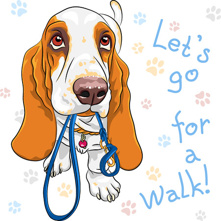 Illustration pour Tan and White dog Basset Hound breed wants to walk with a leash in mouth - image libre de droit