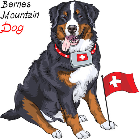 Illustration pour Happy Bernese mountain dog with a first aid kit and Swiss flag - image libre de droit