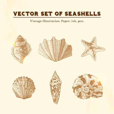 Illustration pour Set of vector vintage seashells  Five illustrations of shells and starfish on a beige background  - image libre de droit