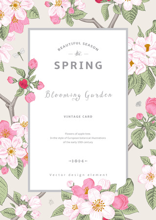 Illustration pour Vintage vector vertical card spring. Branch of apple tree blossoms pink flowers on gray background. - image libre de droit