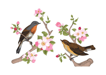 Illustration pour Vintage vector spring card. Birds on a branch of apple blossoms pink flowers. - image libre de droit