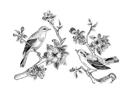 Illustration pour Vintage vector spring card. Birds on a branch of apple blossoms. Monochrome. - image libre de droit