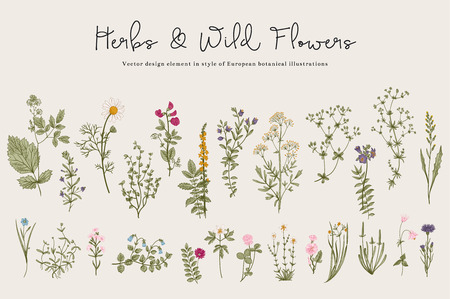 Illustration pour Herbs and Wild Flowers. Botany. Set. Vintage flowers. Colorful illustration in the style of engravings. - image libre de droit