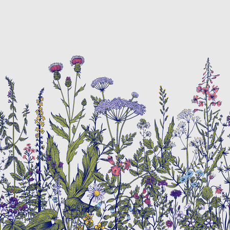 Illustration pour Vector seamless floral border. Herbs and wild flowers. Botanical Illustration engraving style. Colorful - image libre de droit
