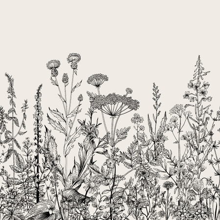 Illustration pour Vector seamless floral border. Herbs and wild flowers. Botanical Illustration engraving style. Black and white - image libre de droit