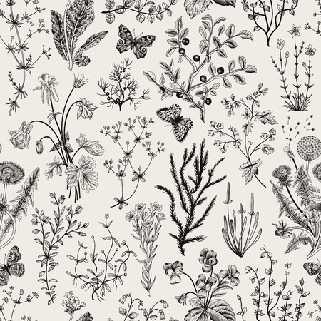 Illustration pour Vector vintage seamless floral pattern. Herbs and wild flowers. Botanical Illustration engraving style. Black and white. - image libre de droit