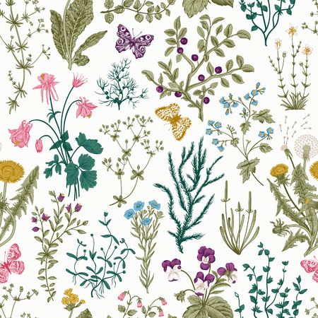 Illustration pour Vector vintage seamless floral pattern. Herbs and wild flowers. Botanical Illustration engraving style. Colorful - image libre de droit