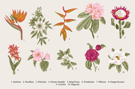 Illustration pour Exotic flowers set. Botanical vintage illustration. - image libre de droit
