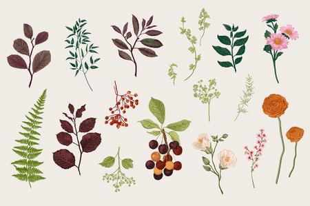 Ilustración de Leaves, flowers and berries set. Botanical vector vintage illustration. Set of florist. Colorful - Imagen libre de derechos