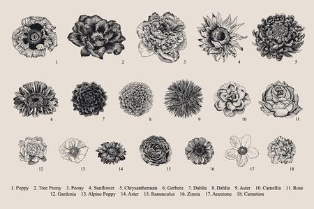 Ilustración de Dahlias set. Botanical vector vintage illustration. Design elements. Black and white - Imagen libre de derechos