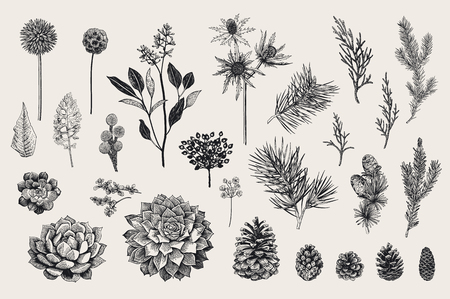 Illustration pour Botanical vector vintage illustration. - image libre de droit