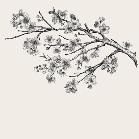 Illustration for Sakura. Cherry blossom branch. Vector botanical illustration. Black and white - Royalty Free Image