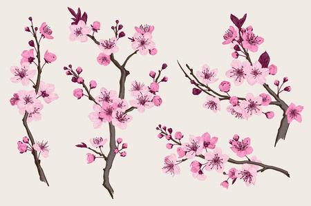 Ilustración de Sakura. Pink cherry blossom branch. Vector botanical illustration. Set - Imagen libre de derechos