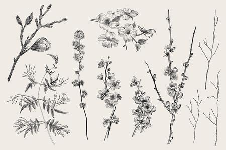 Ilustración de Blooming gargen. Spring Flowers and twig. Magnolia, spirea, cherry blossom, dogwood, jasmine, quince, birch twig. Vintage vector botanical illustration. Black and white - Imagen libre de derechos
