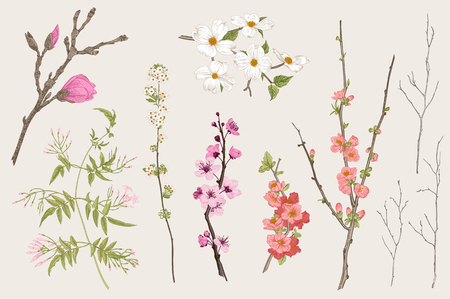 Illustration pour Blooming gargen. Spring Flowers and twig. Magnolia, spirea, cherry blossom, dogwood, jasmine, quince, birch twig. Vintage vector botanical illustration - image libre de droit