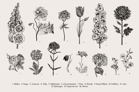 Illustration pour Big set flowers. Victorian garden flowers. Classical botanical vintage illustration. Black and white - image libre de droit