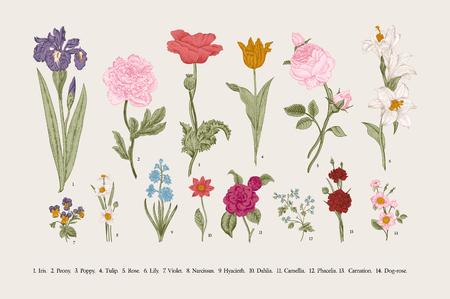 Ilustración de Classical botanical illustration. Victorian garden flowers. Vector vintage set. - Imagen libre de derechos