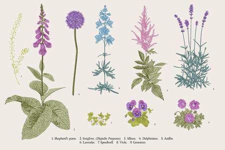 Ilustración de Set garden flowers. Classical botanical illustration. Blue, violet, pink, purple flowers - Imagen libre de derechos