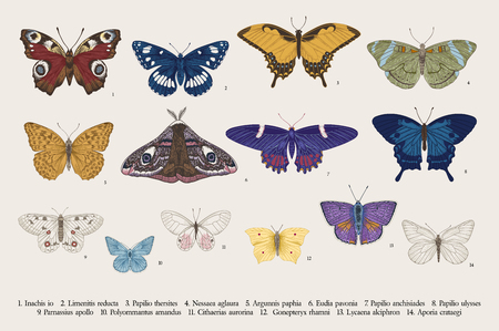 Illustration pour Set butterflies. Vector vintage classic illustration. Colorful - image libre de droit