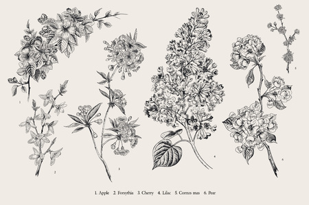 Illustration pour Blooming trees. Vintage vector botanical illustration. Spring set. Black and white - image libre de droit