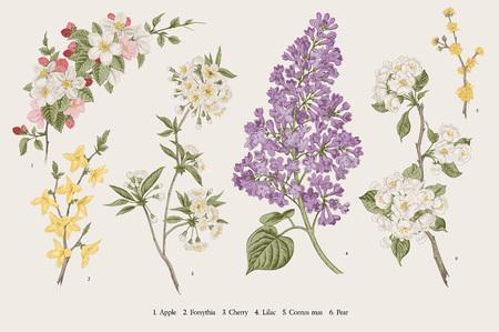 Ilustración de Blooming trees. Vintage vector botanical illustration. Spring set - Imagen libre de derechos