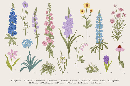 Ilustración de Garden flowers. Set. Vintage vector botanical illustration. - Imagen libre de derechos