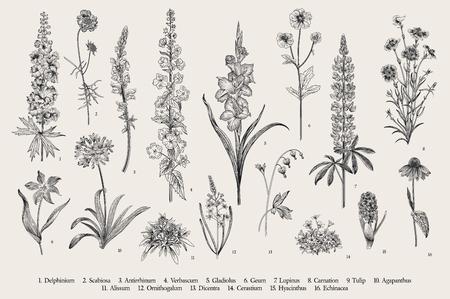 Illustration pour Garden flowers. Set. Vintage vector botanical illustration. Black and white - image libre de droit