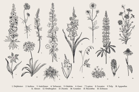 Ilustración de Garden flowers. Set. Vintage vector botanical illustration. Black and white - Imagen libre de derechos