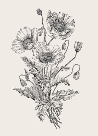 Illustration pour Vintage illustration. Bouquet. Poppies. Black and white    - image libre de droit