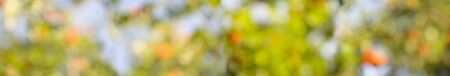 Photo for Autumn natural defocused background with bokeh, orange, green and blue blurred colors - Royalty Free Image