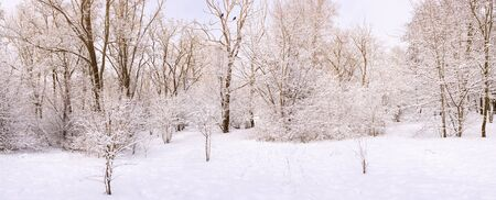 Photo for Winter snow forest or Park landscape natural scene with trees and sky, wide panorama format - Royalty Free Image