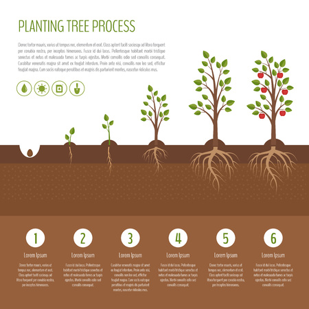 Ilustración de Planting tree process infographic. Apple tree growth stages. Steps of plant growth. Business concept. Flat design, vector illustration. - Imagen libre de derechos