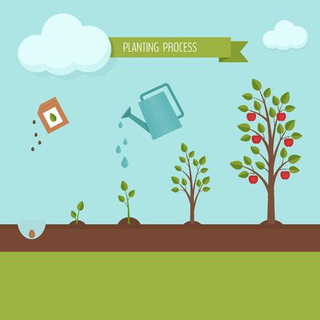 Illustration pour Planting tree process infographic. Apple tree growth stages. Steps of plant growth. Flat design, vector illustration. - image libre de droit