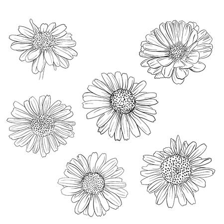 Illustration pour Daisy hand drawn sketches set. Vector llustration. - image libre de droit