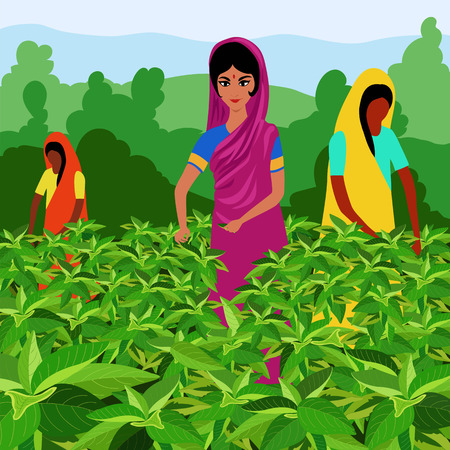 Illustration for Indian women tea pickers - Royalty Free Image
