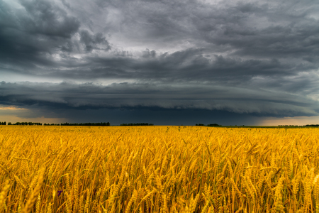 Photo pour Round storm cloud over a wheat field. Russia - image libre de droit